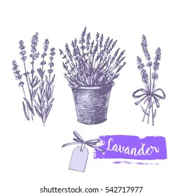 Graphic lavender set. Illustration for greeting cards, invitations, and other printing projects.