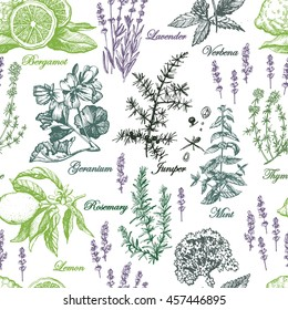 Graphic pattern with aromatic plants. Hand drawing. Seamless for fabric design, gift wrapping paper and printing and web projects.
