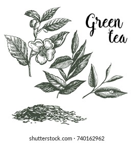 Graphic pattern of Green Tea. Hand drawing.