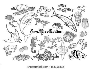 Graphic sea life collection. Vector ocean creatures isolated on white background. Coloring book page design for adults and kids