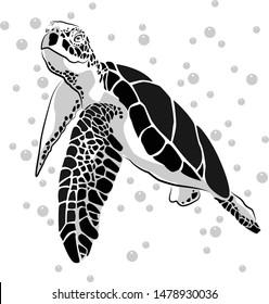 graphic sea turtle,vector illustration of sea turtle
