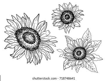 Graphic set of hand-drawn sunflowers