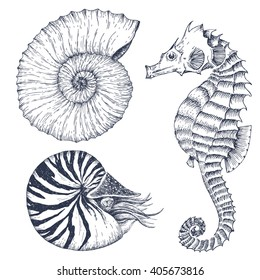graphic set, marine inhabitants, nautilus, shell, seahorse, dudling handmade drawing, isolated vector object