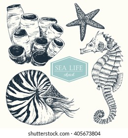 Graphic set of marine life, botanical drawing nautilus, sea sponge, sea horse, dudling handmade drawing, isolated vector object