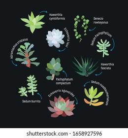 Succulent Name Images Stock Photos Vectors Shutterstock