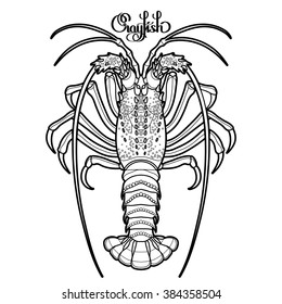 Graphic vector crayfish drawn in line art style. Spiny or rocky lobster. Sea and ocean creature isolated on white background. Top view. Seafood element. Coloring book page design for adults and kids