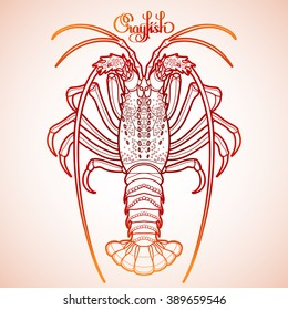 Graphic vector crayfish drawn in line art style. Spiny or rocky lobster. Sea and ocean creature isolated in red colors. Top view. Seafood element. Coloring book page design