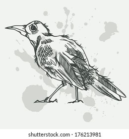 Graphic vector illustration with hand drawn bird.