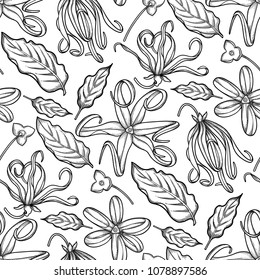 Graphic ylang ylang seamless pattern. Vector leaves and flowers. Herbal medicine and aroma therapy. Coloring book page for adults and kids