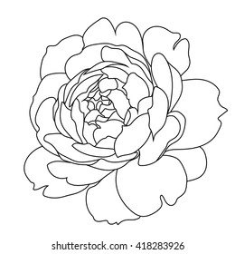 Graphical black and white rose bud, sketch, isolated on a white background. Vector.