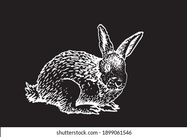 Graphical bunny isolated on black background, engraved illustration