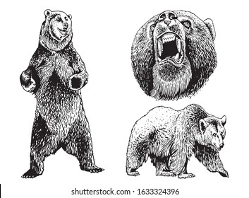 Graphical collection of bears isolated on white background, vector sketchy illustration