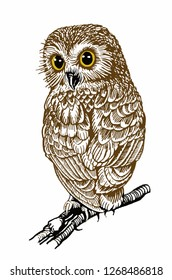 Graphical color owl isolated on white, night bird for typography and tattoo,vector