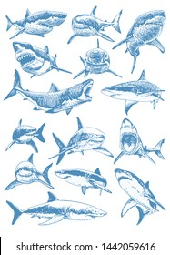 Graphical color set of sharks isolated on white background,blue sharks,illustration