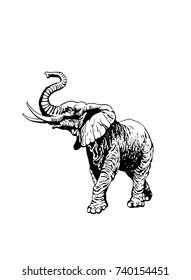 Graphical elephant walking isolated on white background,vector illustration