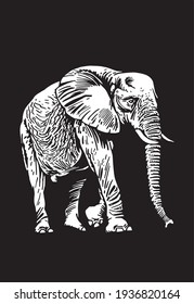 Graphical elephant walking on black background,vector  engraved illustration