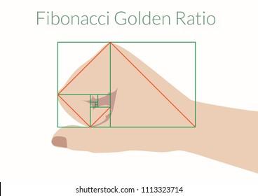 Graphical explanation of the algorithm Fibonacci. Human fist and Fibonacci Golden Ratio. Vector illustration EPS-8.