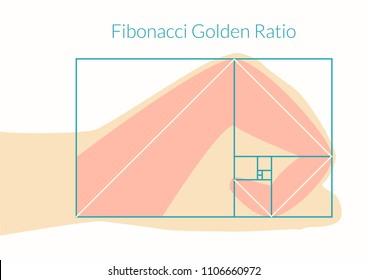 Graphical explanation of the algorithm Fibonacci number in nature. Human hand and Fibonacci Golden Ratio. Vector illustration EPS-8.