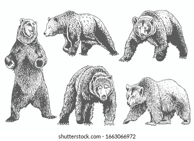Graphical grey grizzly bears set isolated on white,vector illustration