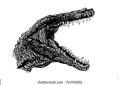 Graphical grin of crocodile isolated on white background,vector illustration