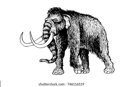 Graphical hand-painted mammoth isolated on white background,vector