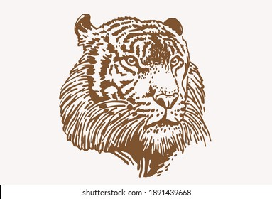 Graphical head of tiger , sepia background, vector vintage illustration
