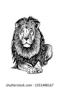 Graphical lion sitting isolated on white background,vector illustration,tattoo