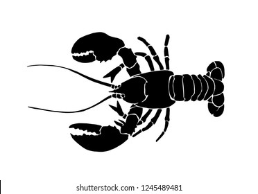 Graphical lobster isolated on white background,vector illustration for tattoo and printing