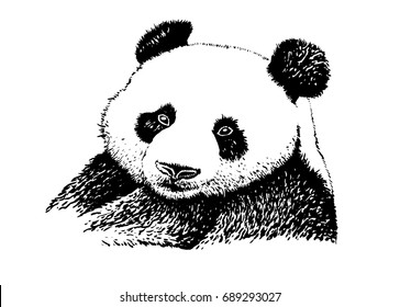 Panda Drawing Images Stock Photos Vectors Shutterstock