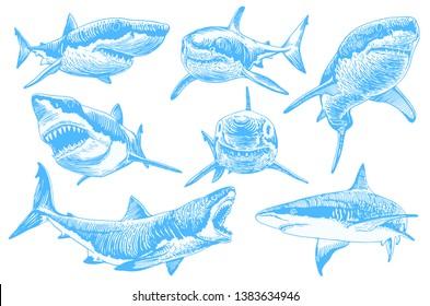 Graphical set of blue sharks  isolated on white background,vector color sharks for tattoo and printing