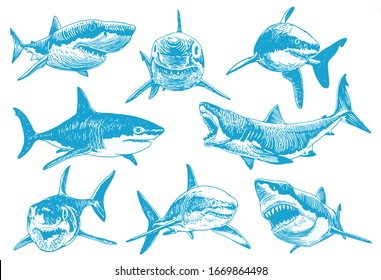 Graphical  set of blue sharks isolated on white background, vector color illustration for tattoo and printing