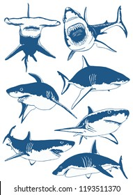 Graphical set color sharks isolated on white  , seafood  background ,vector tattoo