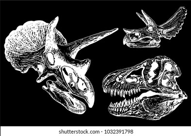 Graphical set of   dino skulls isolated on black background,vector illustration