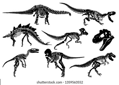 Dinosaur Skeleton Images, Stock Photos & Vectors | Shutterstock