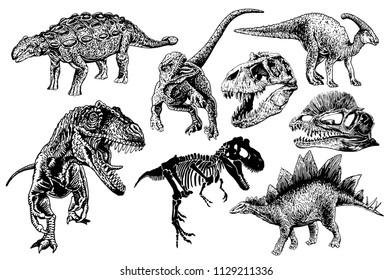 Graphical set of dinosaurs isolated on white background,vector tyrannosaurus, skeleton, skull, ankylosaurus,  parazaurolophus,stegosaurus