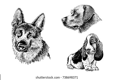 Graphical set of dogs isolated on white background,vector labrador retriever,dachshund and sheep dog