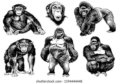 Graphical set of gorillas isolated on white background,vector sketchy illustration
