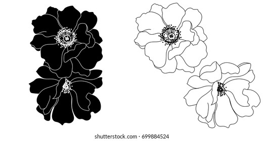 Graphical set of hand-drawn daisy, poppy flowers. Vector.