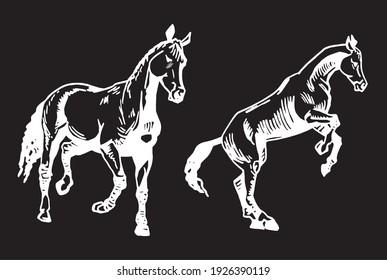 Graphical set of horses isolated on black background, engraved illustration