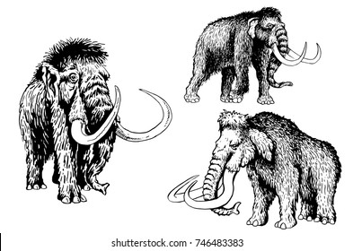 Graphical set of mammoths isolated on white background,vector