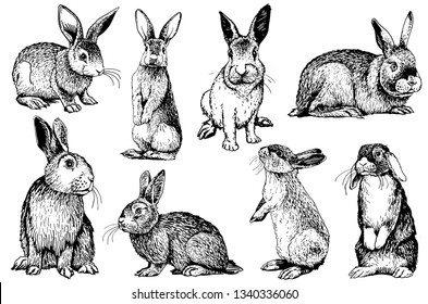 Graphical set of rabbits isolated on white background,vector illustration