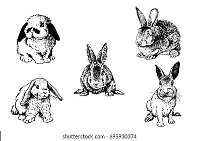 Graphical set of rabbits isolated on white background, vector sketched illustration