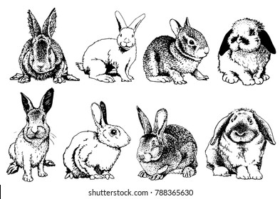 Graphical set of rabbits isolated on white background,vector sketch