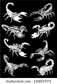 Graphical set of scorpions isolated on black background,vector sketch for tattoo and printing design