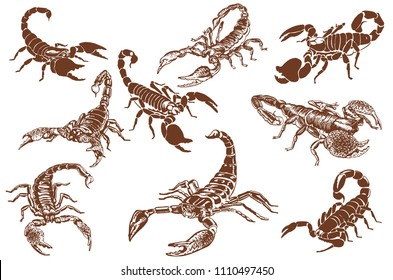 Graphical set of scorpions,vector vintage illustration