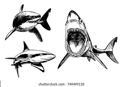 Imágenes Fotos De Stock Y Vectores Sobre Tiburon Dibujos