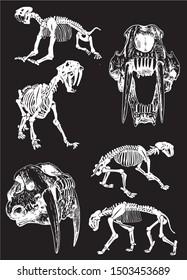 Graphical set of skeletons of saber-toothed tiger on black background,vector illustration, anthropology