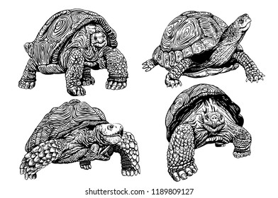 Graphical set of tortoises isolated   on white background,vector sketch for printing
