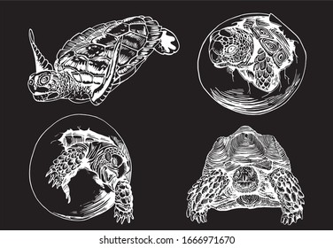 Graphical set of tortoises isolated on black background,  vector engraved  illustration