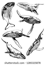 Graphical set of whales isolated on white background,vector hand-drawn illustration
